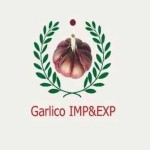 Garlico For Import And Export