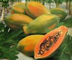 Adorable Fresh Papaya Superior Grade A From South Africa