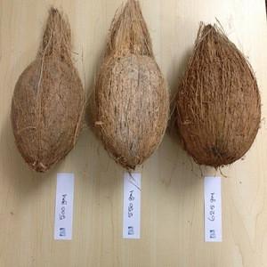 Full Husk Mature Coconuts
