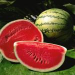 Oriental Sweet Melon F1
