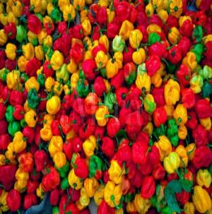 Wholesale Best Priced Fresh Habanero Pepper
