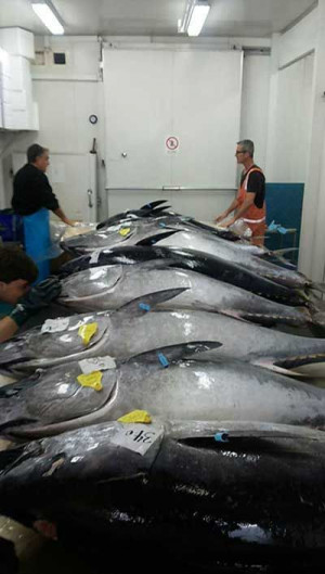 frozen seafood fresh whole round wahoo fish for sale