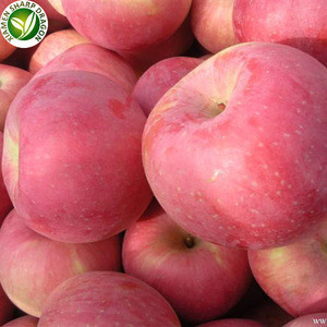 Bulk prices new peeled fruit brand iqf chinese frozen apple cubes