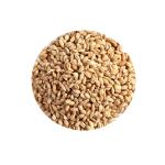 Premium Barley Grain Animal Feed Bulk Barley Grains Barley Seeds