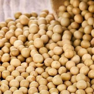 Gmo And Fresh Non Gmo Grade AA Soybeans/Soybean