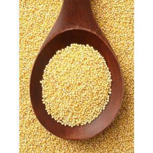 Organic Millets, Finger Millet, Ragi Crop