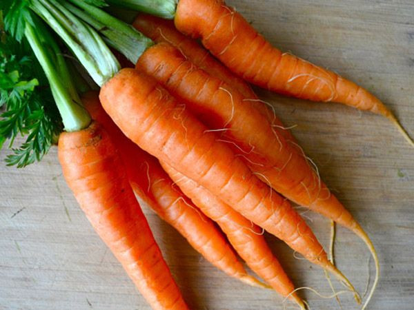 Import Free tax Vietnam fresh carrot and carrot powder - Wholesale for dried carrot / fresh - High quality carrot extract Cheap Price Bio Clean from Vietnam