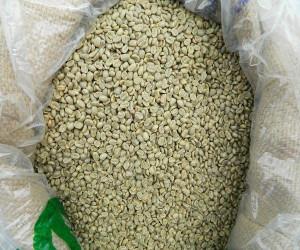 Arabica Coffee Beans/ green beans coffee