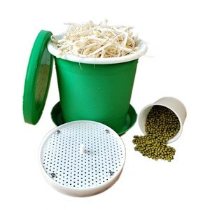 year Mung beans for sprouting green mung beans