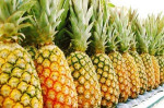 Best Quality Fresh Pineapples at affordable prices.