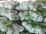 best price of fresh cabbage with high quality