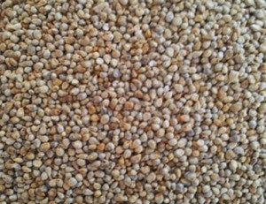 Animal feed green millets for sale in bulk