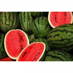 High Quality Fresh Water Melon/Watermelon