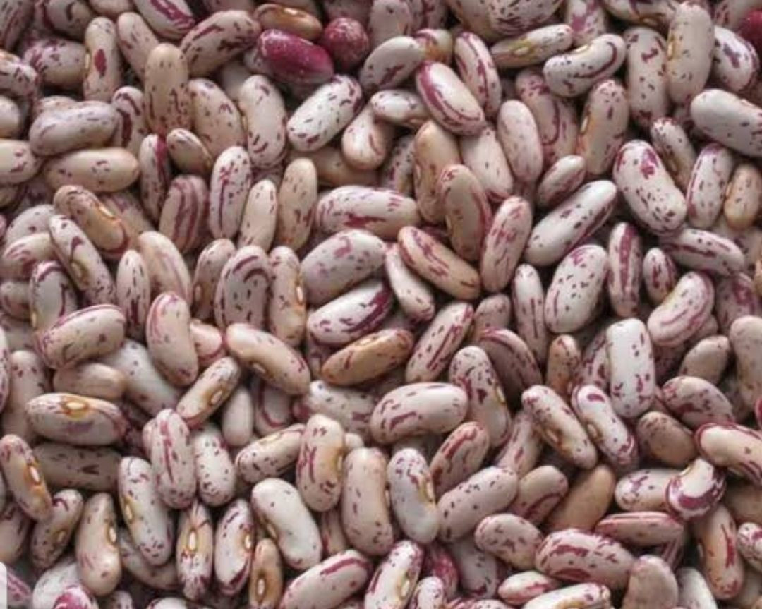 Rose Coco Beans