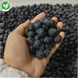 iqf organic frozen blueberry fresh fruit bulk frozen blueberries
