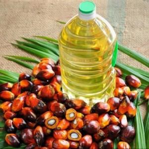 Wholesale Organic Palm Oil