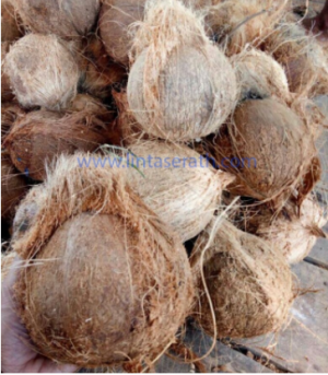 Semi Husked Matured Coconut