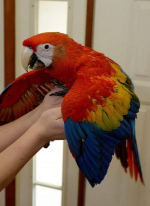 Macaws for Sale - Bird Breeders