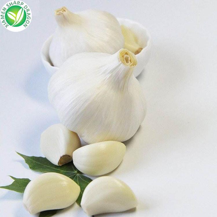 organic 10kg packing garlic fresh snow white garlic