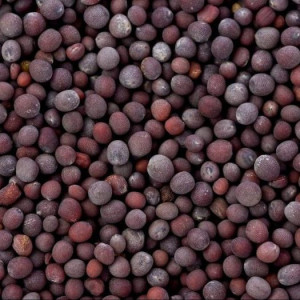 Yellow Mustard Seeds / Black Mustard Seeds / White Mustard Seeds