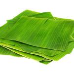 GREEN BANANA LEAVES FROM VIETNAM/ FRESH BANANA LEAF + 84 902 625 900